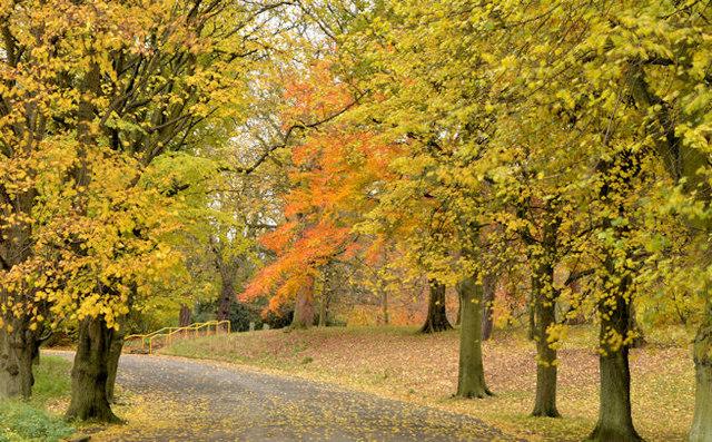 Autumn trees, Ormeau Park, Belfast (1 in 2013)