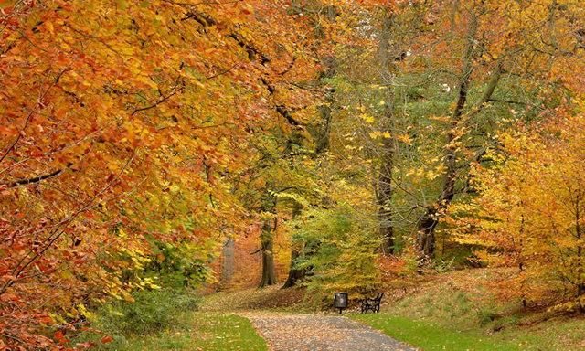 autumn trees  ormeau park  belfast  2 in     u00a9 albert