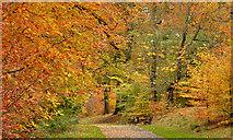 J3472 : Autumn trees, Ormeau Park, Belfast (2 in 2013) by Albert Bridge