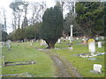 SU7887 : Yew tree in the cemetery at Pheasant's Hill by Rod Allday