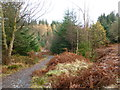 NN4906 : Path in Achray Forest by Alan O'Dowd