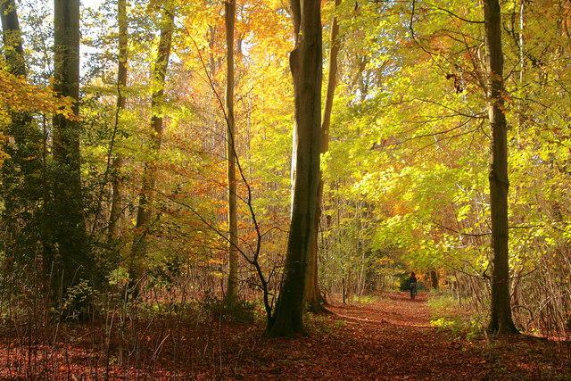 Autumn in Little Park Copse