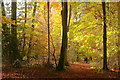 SU6946 : Autumn in Little Park Copse by Hugh Chevallier