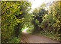 ST5769 : Path, Manor Woods Valley by Derek Harper
