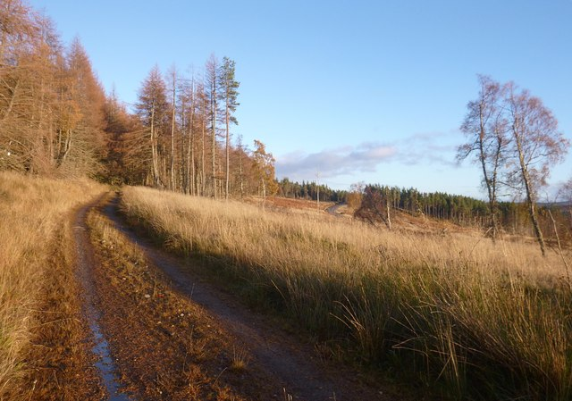 Track in Boblainy Forest