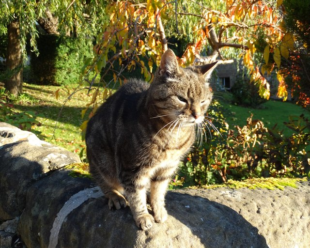 Cat on a wall - Two Dales