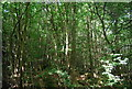 TQ3734 : Hastings Wood by N Chadwick