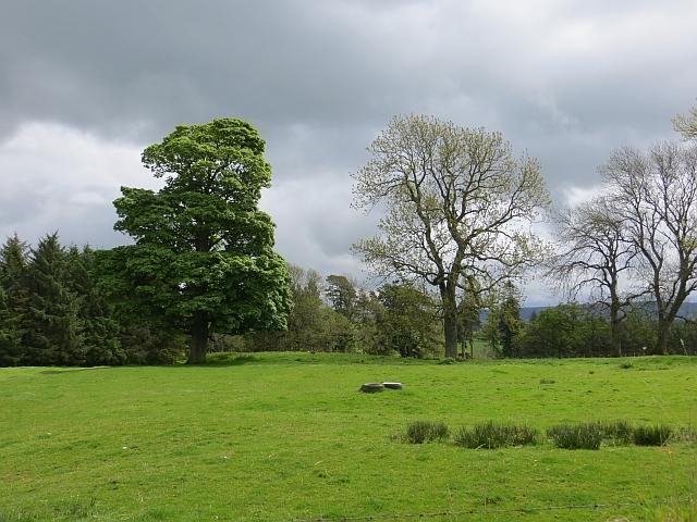 Grass field, Prendwick