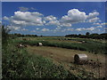 TG3304 : Circular hay bales in field S of Rockland Broad, Rockland St Mary by Colin Park