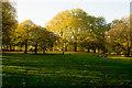 TQ2879 : Green Park by Jim Osley