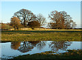 NY9921 : Trees and reflections near to Romaldkirk by Trevor Littlewood