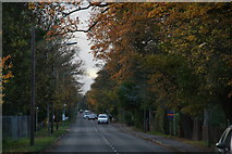 TA2904 : Cold late November in Humberston Avenue by Chris