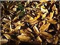 SX9065 : Fallen leaves below The Rainbow by Derek Harper