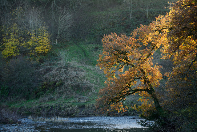Autumnal trees above River Tees