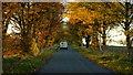 ST8066 : White van, golden leaves by Jonathan Billinger