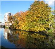 TQ1883 : Autumn colour by the canal, Alperton by David Hawgood