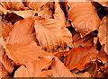 J3268 : Autumn leaves, Minnowburn, Belfast (6) by Albert Bridge
