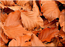 J3268 : Autumn leaves, Minnowburn, Belfast (6) by Albert Bridge
