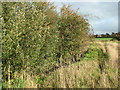 TG2704 : Shrubs beside small pond, Kirby Bedon by Evelyn Simak