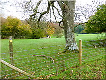 SU8216 : Monkton Farm seen from footpath to the west by Shazz