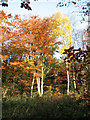 TG1622 : Autumn colours beside Holt Road by Evelyn Simak