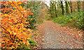 J4582 : Autumn, Clandeboye Avenue, Helen's Bay (2013) by Albert Bridge