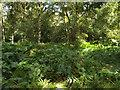 SP1373 : Arnold's Wood, Umberslade Estate by Robin Stott