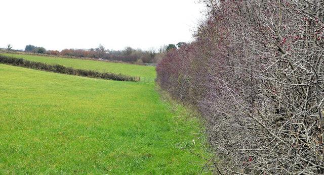 Leafless hedge, Craigantlet