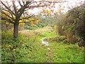 ST6777 : Path, Lyde Green by Derek Harper