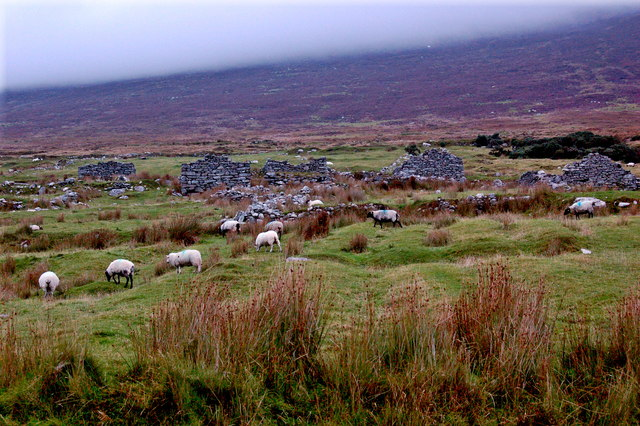 Achill Island - Deserted Village - Grazing Sheep & Cottage Ruins