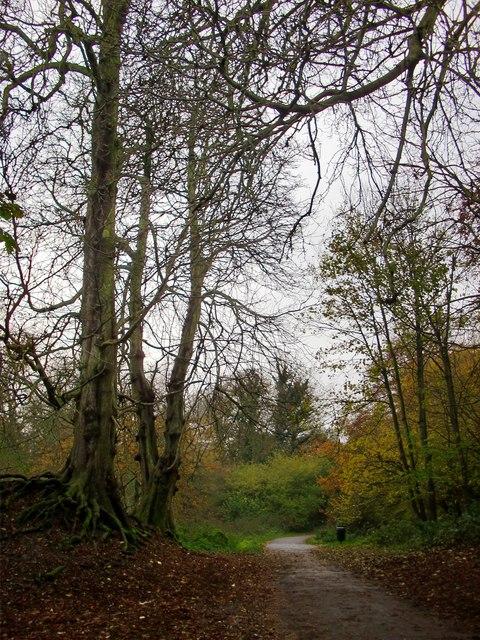 Conker trees in Crane Park
