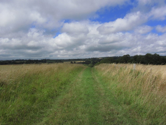Grassy trackway over Stapleash Down near Chilgrove