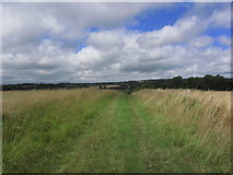 SU8414 : Grassy trackway over Stapleash Down near Chilgrove by Colin Park