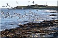 NU2613 : Seaweed and seagulls at Boulmer Beach by Russel Wills