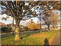 ST6577 : Verge by Badminton Road by Derek Harper