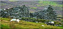 F6307 : Achill Island - Deserted Village - Sheep Grazing near Cottage Ruins by Joseph Mischyshyn