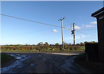 TM2890 : Topcroft Road at Bedingham Corner by Adrian Cable