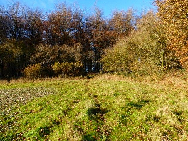Corner of field by Wildhams Wood