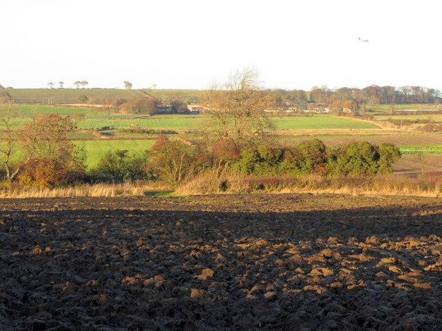 Farmland north of A69 near Cut End