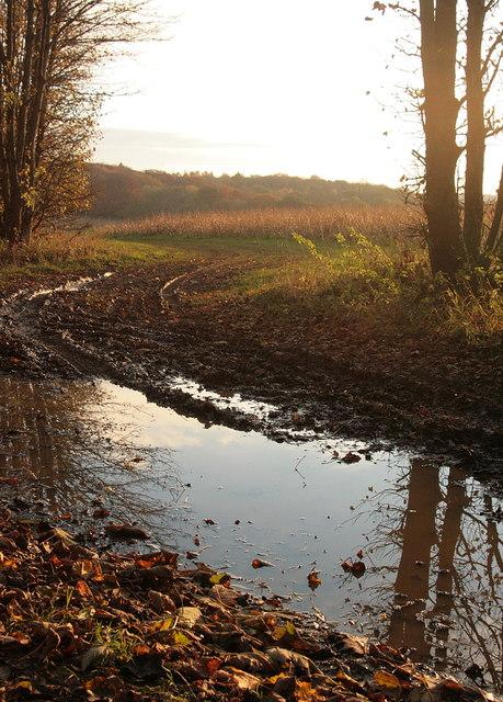 Muddy path on the Hoddington Estate