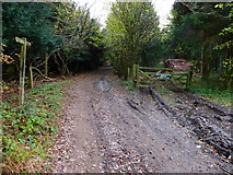 SU8213 : Bridleway by The Plantation with log pile by Shazz