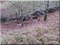 SD7512 : Abandoned farm machinery by Philip Platt