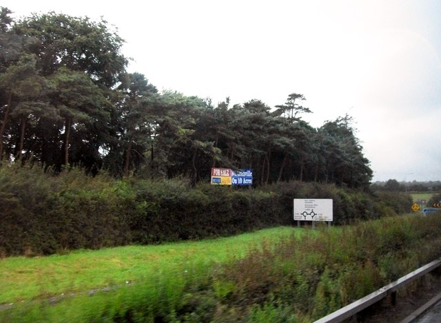 Woodland at Junction  8 of the M1