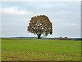 SU7723 : Tree in field by Robin Webster
