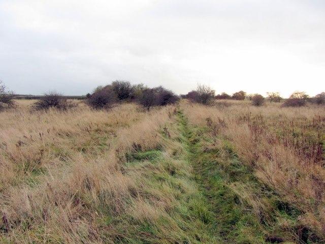 Eastern arm of former Walbottle Moors Waggonway