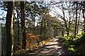 SD9830 : Track above Crimsworth Dean by Bill Boaden