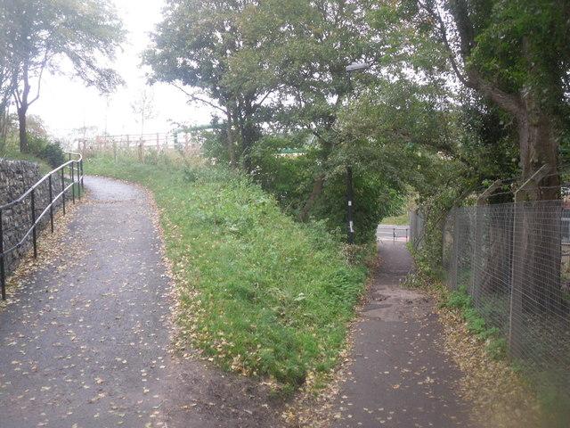 Pathways split into 2