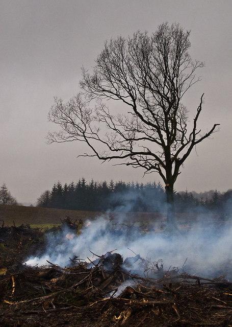Woodland clearance