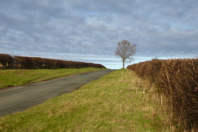 Lane leading to Huggate