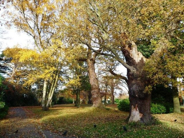 Oak and silver birch, Richmond Park